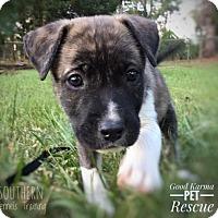 Adopt A Pet :: Cutter - Fort Lauderdale, FL