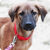 Adopt A Pet :: Toby - South Bend, IN
