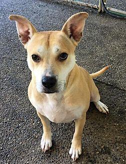 Husky/Australian Cattle Dog Mix Dog for adoption in Bainbridge Island, Washington - CECE - fun active 'talker'