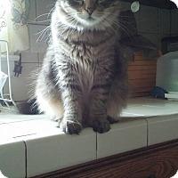 Adopt A Pet :: Sassy - Locust, NC
