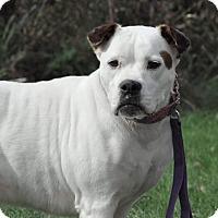 Adopt A Pet :: Stella - Lisbon, OH