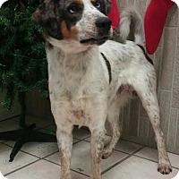 Adopt A Pet :: Geyser - Newburgh, IN