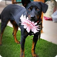 Adopt A Pet :: Haven - Casa Grande, AZ