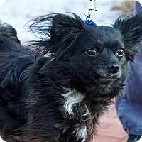 Adopt A Pet :: Gizzy - Scituate, MA