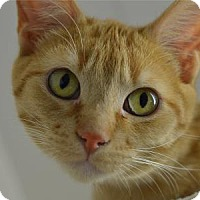 Adopt A Pet :: Cheddar - Freeport, IL