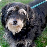 Adopt A Pet :: Tubby ADOPTION PENDING - Sacramento, CA