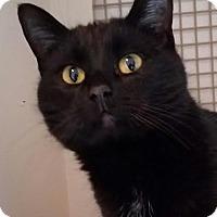 Adopt A Pet :: Mystic - Colfax, IA