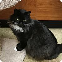 Adopt A Pet :: Albany - Pleasanton, CA