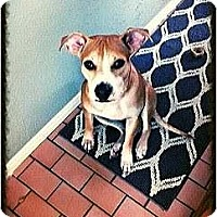 Adopt A Pet :: Sandy - Houston, TX