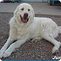 Adopt A Pet :: Jumbo - Hawk Springs, WY