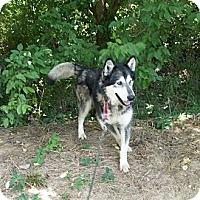 Adopt A Pet :: Wolfgang - Augusta County, VA