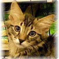 Adopt A Pet :: Ernie - Irvine, CA