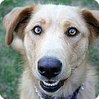 Adopt A Pet :: Lenexa - Austin, TX