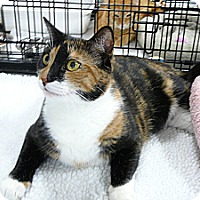 Adopt A Pet :: Mary - Springfield, PA