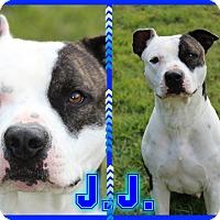 Adopt A Pet :: J.J. - Tampa, FL