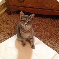Adopt A Pet :: Zouko - Fairborn, OH