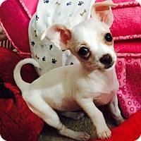 Adopt A Pet :: Zoe - Las Vegas, NV