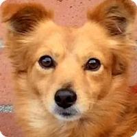 Adopt A Pet :: WARREN (video) - Los Angeles, CA