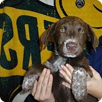 Adopt A Pet :: Jewels - Oviedo, FL