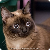 Adopt A Pet :: Mulan - Fountain Hills, AZ