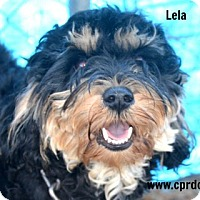 Adopt A Pet :: Lela~adopted!! - Glastonbury, CT