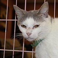 Adopt A Pet :: Tessa - Louisville, KY