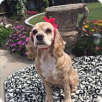 Adopt A Pet :: GYPSY - Santa Barbara, CA