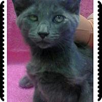 Adopt A Pet :: Delancy - Trevose, PA
