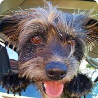 Adopt A Pet :: ROCKY - Plano, TX
