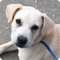 Adopt A Pet :: Barney - Staunton, VA