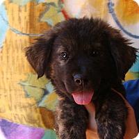 Adopt A Pet :: Denver - Oviedo, FL