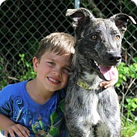 Adopt A Pet :: Kilgore - SOUTHINGTON, CT