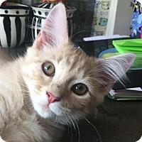 Adopt A Pet :: Ryker - Fort Lauderdale, FL