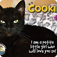 Adopt A Pet :: Cookie - Davenport, IA