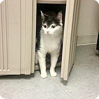 Adopt A Pet :: Lucky - Indianola, IA