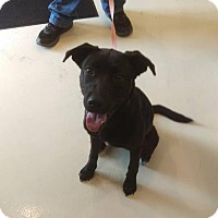 Adopt A Pet :: Misty - Mt. Gilead, OH