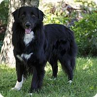Adopt A Pet :: FONZI - Ile-Perrot, QC