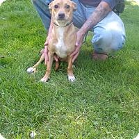 Adopt A Pet :: Jill - Kendall, NY