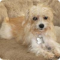 Adopt A Pet :: Lark - Bedminster, NJ