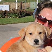 Adopt A Pet :: Apollo - Sugar Grove, IL