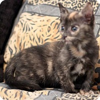 Adopt A Pet :: Torie - Concord, NC