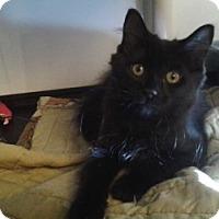 Adopt A Pet :: Boris - Middletown, CT