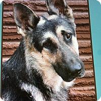 Adopt A Pet :: JUNO VON JOLI - Los Angeles, CA