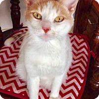 Adopt A Pet :: Hope - Lindsay, ON