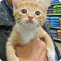 Adopt A Pet :: Max - Reston, VA