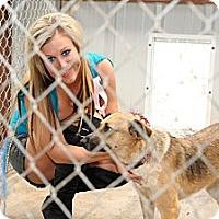 Adopt A Pet :: Lacy - McKinney, TX