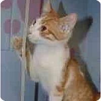 Adopt A Pet :: Maximus - Chesapeake, VA