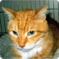 Adopt A Pet :: Ranger - Medway, MA