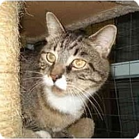 Adopt A Pet :: Paws - Mission, BC