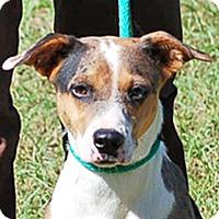 Adopt A Pet :: Genie AD 12-15-15 - Preston, CT